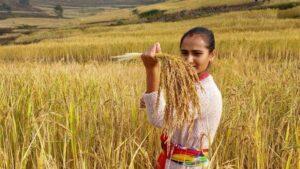 Ananda Jyoti Agriculture School; Elevate Nepal